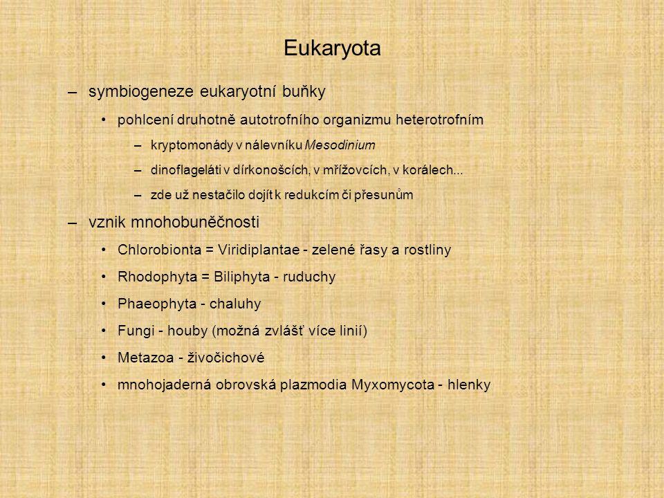 Eukaryota –symbiogeneze eukaryotní buňky pohlcení druhotně autotrofního organizmu heterotrofním –kryptomonády v nálevníku Mesodinium –dinoflageláti v