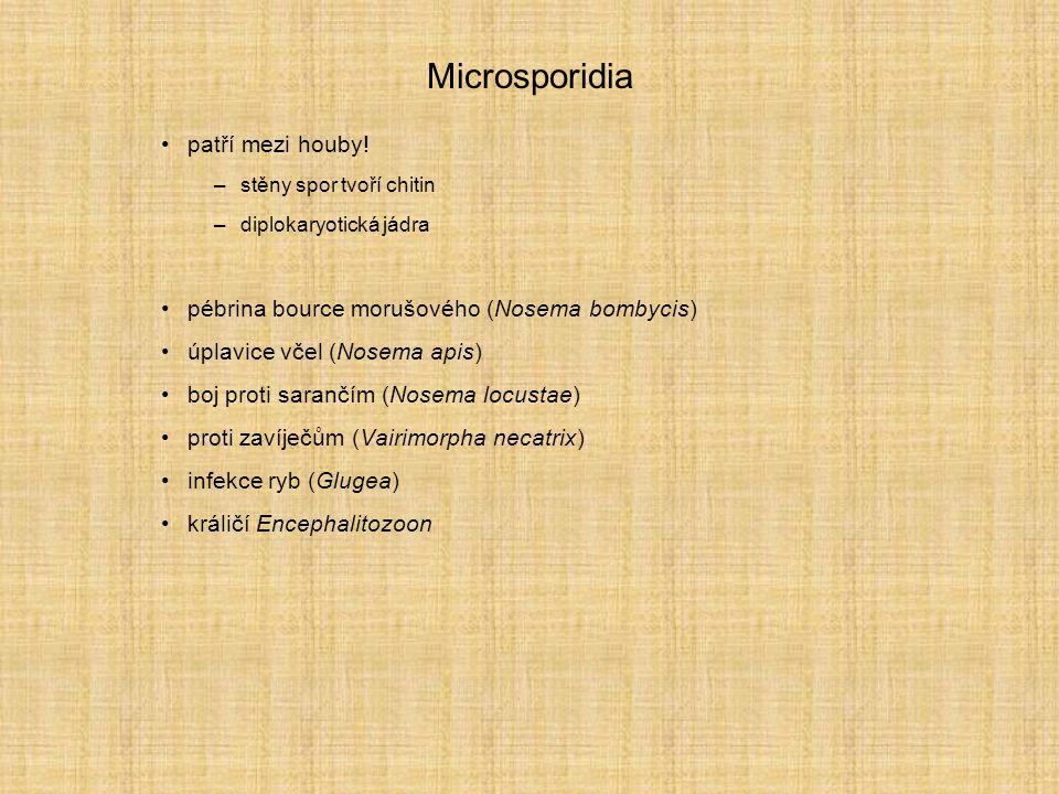 Microsporidia patří mezi houby! –stěny spor tvoří chitin –diplokaryotická jádra pébrina bource morušového (Nosema bombycis) úplavice včel (Nosema apis