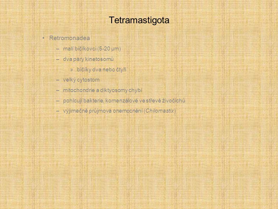 Tetramastigota Retromonadea –malí bičíkovci (5-20 µm) –dva páry kinetosomů »bičíky dva nebo čtyři –velký cytostom –mitochondrie a diktyosomy chybí –pohlcují bakterie, komenzálové ve střevě živočichů –výjimečně průjmová onemocnění (Chilomastix)