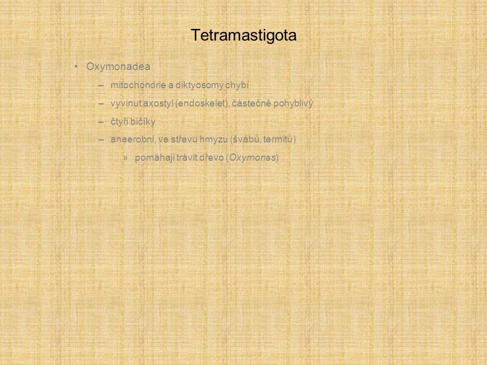 Tetramastigota Oxymonadea –mitochondrie a diktyosomy chybí –vyvinut axostyl (endoskelet), částečně pohyblivý –čtyři bičíky –anaerobní, ve střevu hmyzu