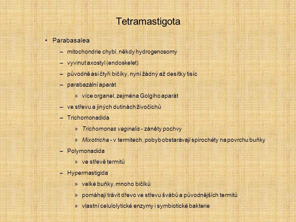 Tetramastigota Parabasalea –mitochondrie chybí, někdy hydrogenosomy –vyvinut axostyl (endoskelet) –původně asi čtyři bičíky, nyní žádný až desítky tisíc –parabazální aparát »více organel, zejména Golgiho aparát –ve střevu a jiných dutinách živočichů –Trichomonadida »Trichomonas vaginalis - záněty pochvy »Mixotricha - v termitech, pobyb obstarávají spirochéty na povrchu buňky –Polymonadida »ve střevě termitů –Hypermastigida »velké buňky, mnoho bičíků »pomáhají trávit dřevo ve střevu švábů a původnějších termitů »vlastní celulolytické enzymy i symbiotické bakterie