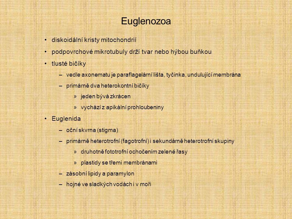 Euglenozoa diskoidální kristy mitochondrií podpovrchové mikrotubuly drží tvar nebo hýbou buňkou tlusté bičíky –vedle axonematu je paraflagelární lišta, tyčinka, undulující membrána –primárně dva heterokontní bičíky »jeden bývá zkrácen »vychází z apikální prohloubeniny Euglenida –oční skvrna (stigma) –primárně heterotrofní (fagotrofní) i sekundárně heterotrofní skupiny »druhotně fototrofní ochočením zelené řasy »plastidy se třemi membránami –zásobní lipidy a paramylon –hojné ve sladkých vodách i v moři
