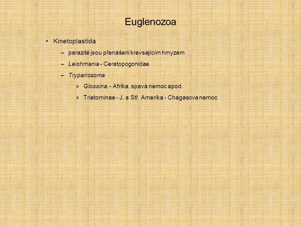 Euglenozoa Kinetoplastida –parazité jsou přenášeni krevsajícím hmyzem –Leishmania - Ceratopogonidae –Trypanosoma »Glossina, - Afrika, spavá nemoc apod