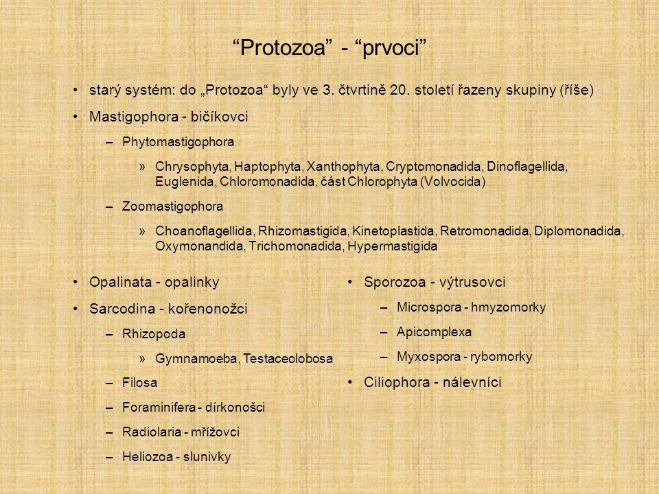 """""""Protozoa"""" - """"prvoci"""" starý systém: do """"Protozoa"""" byly ve 3. čtvrtině 20. století řazeny skupiny (říše) Mastigophora - bičíkovci –Phytomastigophora »C"""