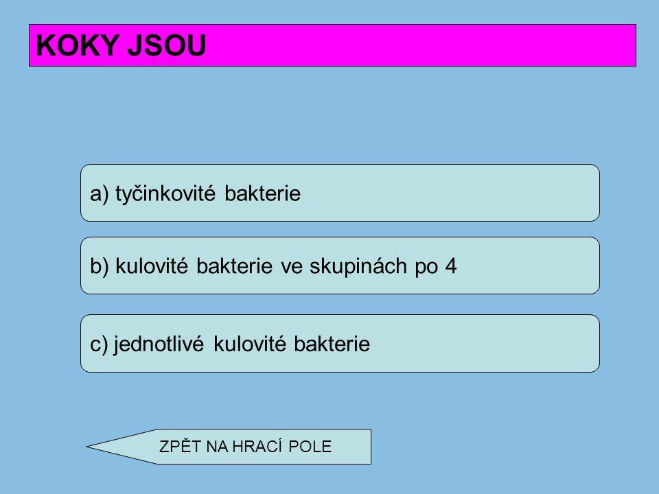 a) tyčinkovité bakterie b) kulovité bakterie ve skupinách po 4 c) jednotlivé kulovité bakterie KOKY JSOU ZPĚT NA HRACÍ POLE