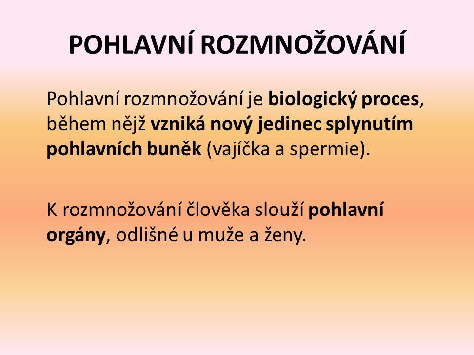 POHLAVNÍ ROZMNOŽOVÁNÍ Pohlavní rozmnožování je biologický proces, během nějž vzniká nový jedinec splynutím pohlavních buněk (vajíčka a spermie).