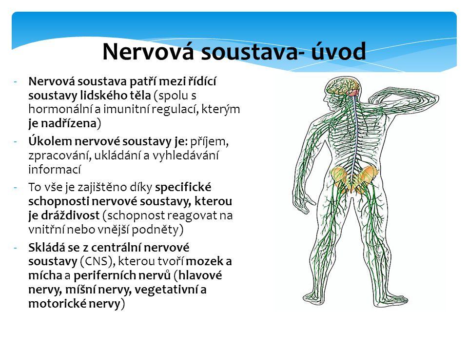 -Nervová soustava patří mezi řídící soustavy lidského těla (spolu s hormonální a imunitní regulací, kterým je nadřízena) -Úkolem nervové soustavy je: