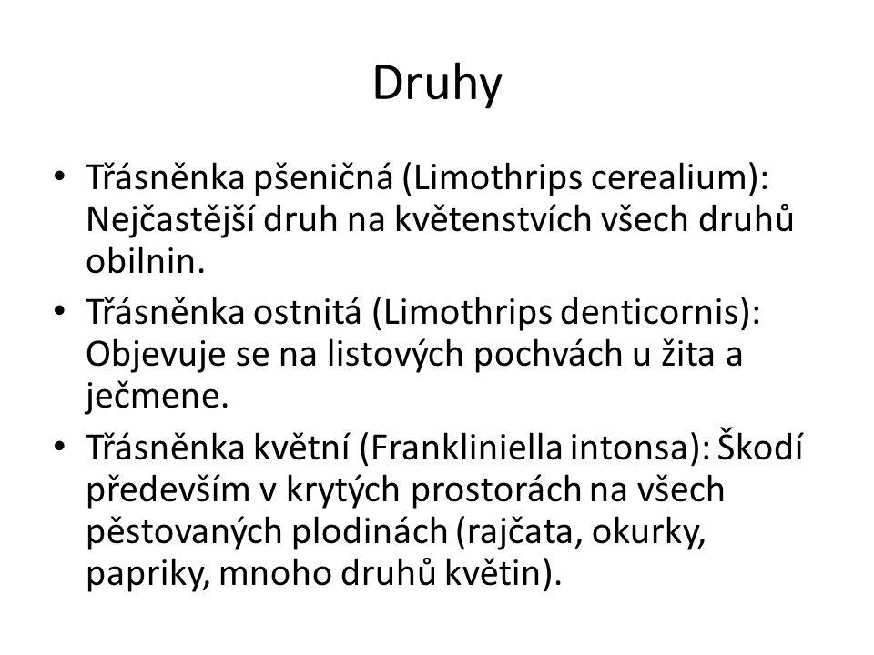 Druhy Třásněnka pšeničná (Limothrips cerealium): Nejčastější druh na květenstvích všech druhů obilnin. Třásněnka ostnitá (Limothrips denticornis): Obj