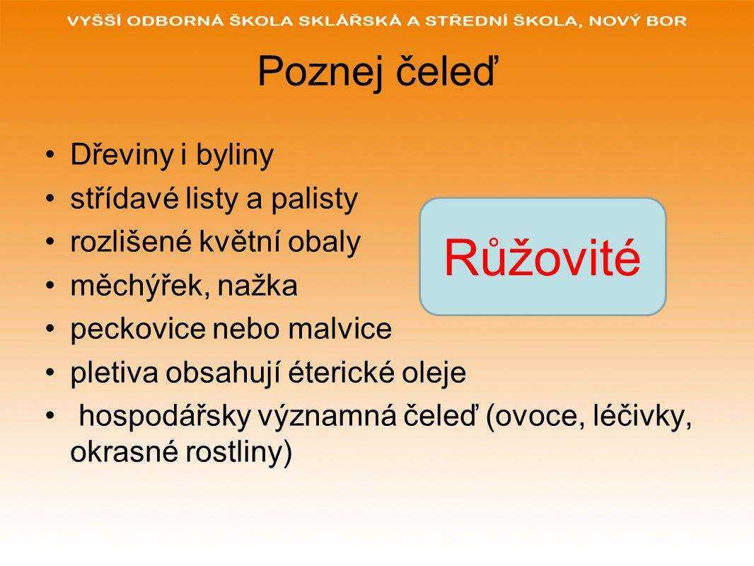 Poznej čeleď mají žahavé chloupky vyskytují se hlavně na rumištích jsou to nitrofilní rostliny květy jednopohlavné, jednodomé i dvoudomé, plod nažka Kopřivovité