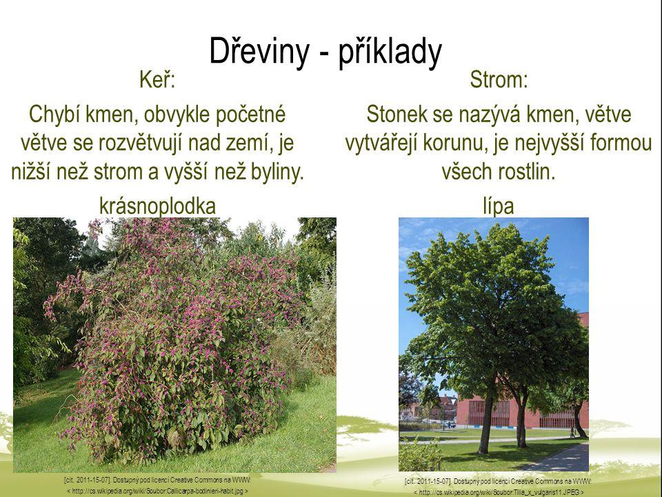 Dřeviny - příklady Keř: Chybí kmen, obvykle početné větve se rozvětvují nad zemí, je nižší než strom a vyšší než byliny. krásnoplodka [cit. 2011-15-07