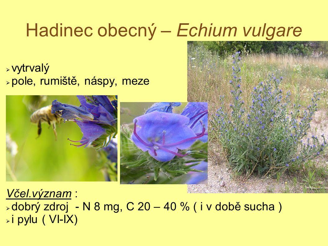 Hadinec obecný – Echium vulgare  vytrvalý  pole, rumiště, náspy, meze Včel.význam :  dobrý zdroj - N 8 mg, C 20 – 40 % ( i v době sucha )  i pylu
