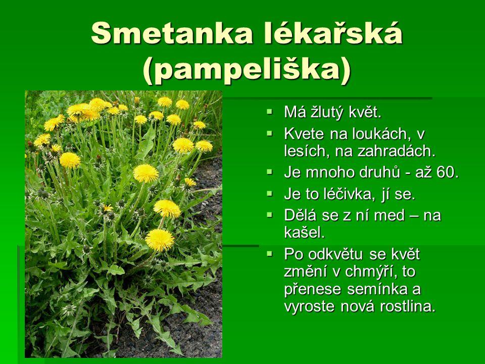 Smetanka lékařská (pampeliška)  Má žlutý květ.  Kvete na loukách, v lesích, na zahradách.  Je mnoho druhů - až 60.  Je to léčivka, jí se.  Dělá s