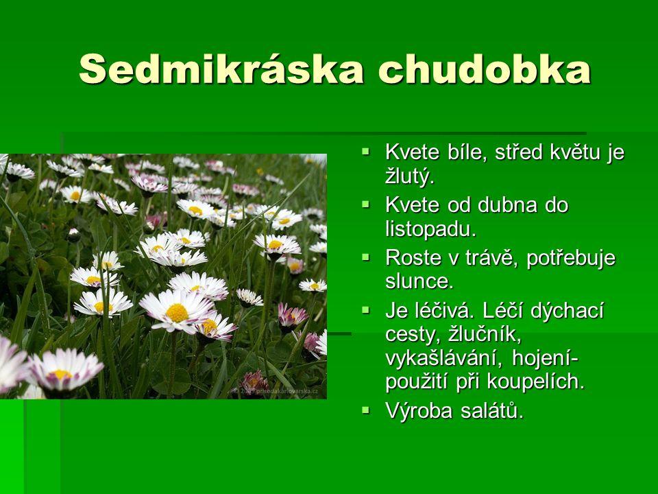 Sedmikráska chudobka  Kvete bíle, střed květu je žlutý.  Kvete od dubna do listopadu.  Roste v trávě, potřebuje slunce.  Je léčivá. Léčí dýchací c