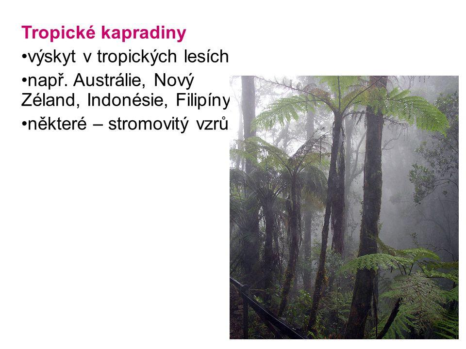 Tropické kapradiny výskyt v tropických lesích např. Austrálie, Nový Zéland, Indonésie, Filipíny některé – stromovitý vzrůst