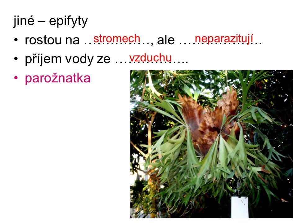 jiné – epifyty rostou na ……………, ale ………………. příjem vody ze …………….. parožnatka stromechneparazitují vzduchu