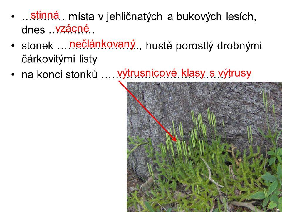 ………… místa v jehličnatých a bukových lesích, dnes …………. stonek ………………….., hustě porostlý drobnými čárkovitými listy na konci stonků ……………………………… stinn