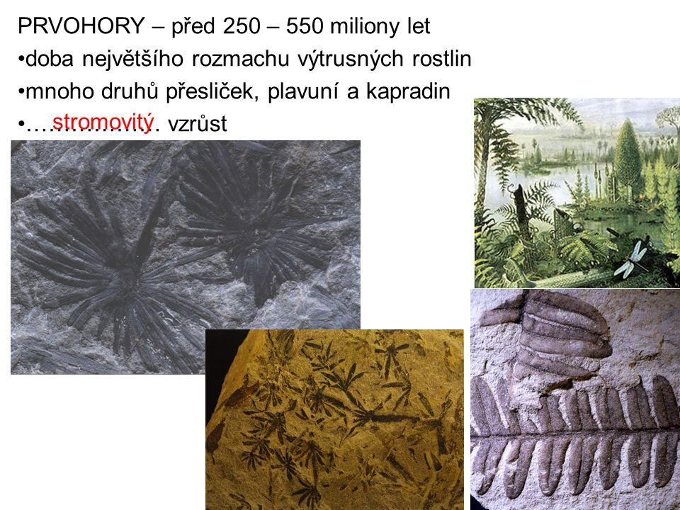 PRVOHORY – před 250 – 550 miliony let doba největšího rozmachu výtrusných rostlin mnoho druhů přesliček, plavuní a kapradin ……………… vzrůst stromovitý
