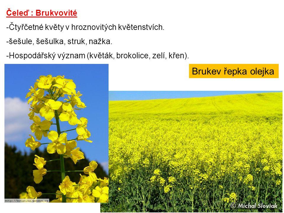 Čeleď : Brukvovité -Čtyřčetné květy v hroznovitých květenstvích. -šešule, šešulka, struk, nažka. -Hospodářský význam (květák, brokolice, zelí, křen).