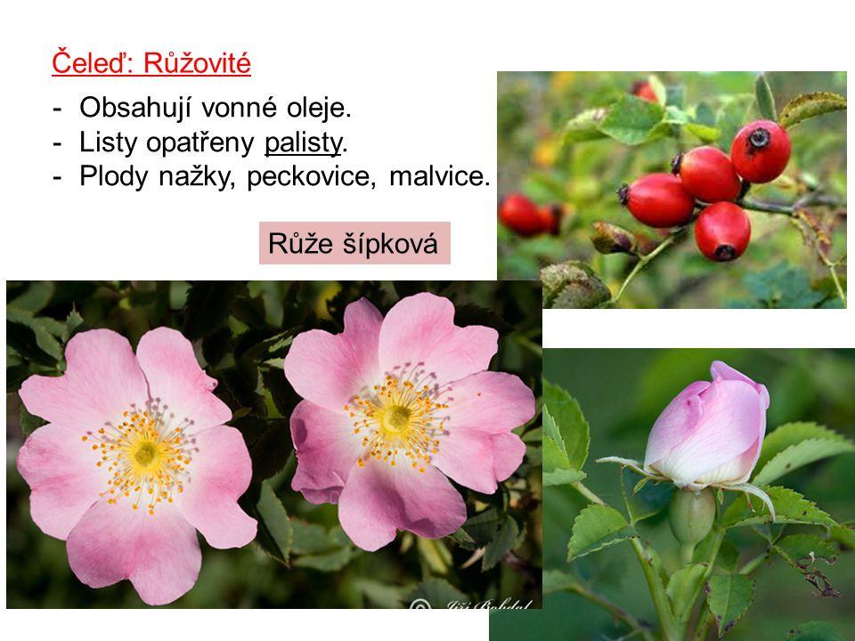 Čeleď: Růžovité -Obsahují vonné oleje.-Listy opatřeny palisty.