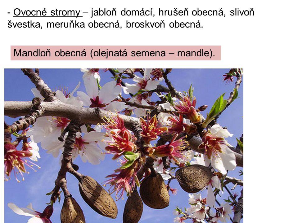 - Ovocné stromy – jabloň domácí, hrušeň obecná, slivoň švestka, meruňka obecná, broskvoň obecná. Mandloň obecná (olejnatá semena – mandle).