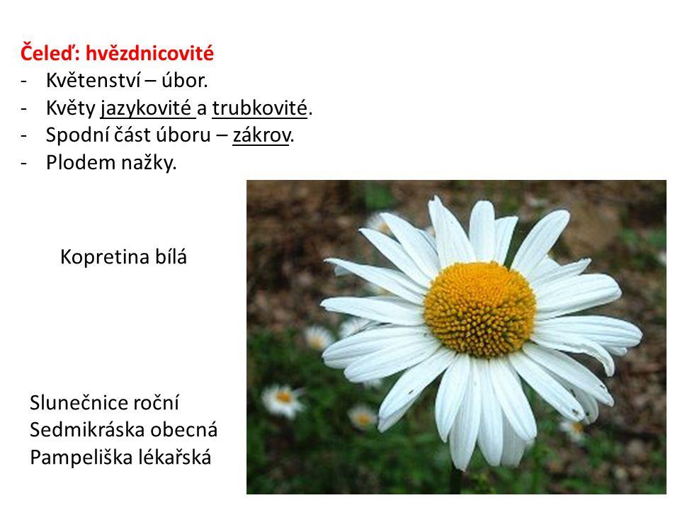 Čeleď: hvězdnicovité -Květenství – úbor.-Květy jazykovité a trubkovité.