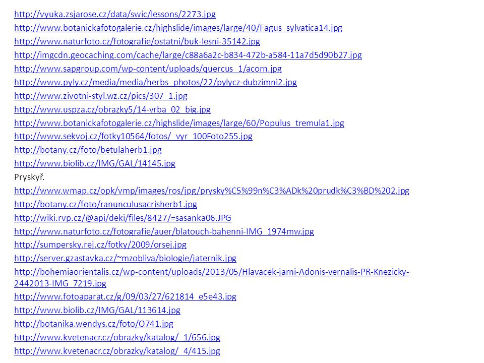 http://vyuka.zsjarose.cz/data/swic/lessons/2273.jpg http://www.botanickafotogalerie.cz/highslide/images/large/40/Fagus_sylvatica14.jpg http://www.natu
