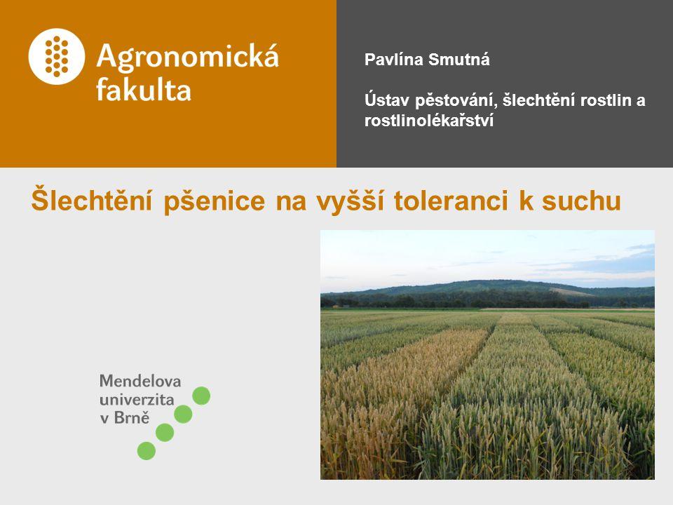 Šlechtění pšenice na vyšší toleranci k suchu Pavlína Smutná Ústav pěstování, šlechtění rostlin a rostlinolékařství