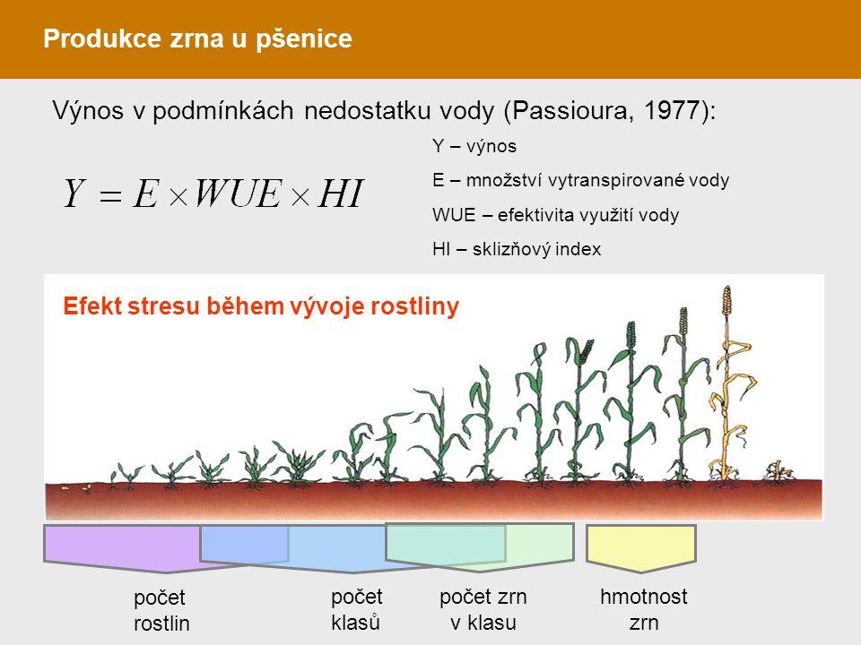 Produkce zrna u pšenice počet rostlin počet klasů počet zrn v klasu hmotnost zrn Efekt stresu během vývoje rostliny Y – výnos E – množství vytranspiro