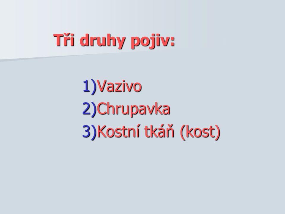 Tři druhy pojiv: 1)Vazivo 2)Chrupavka 3)Kostní tkáň (kost)