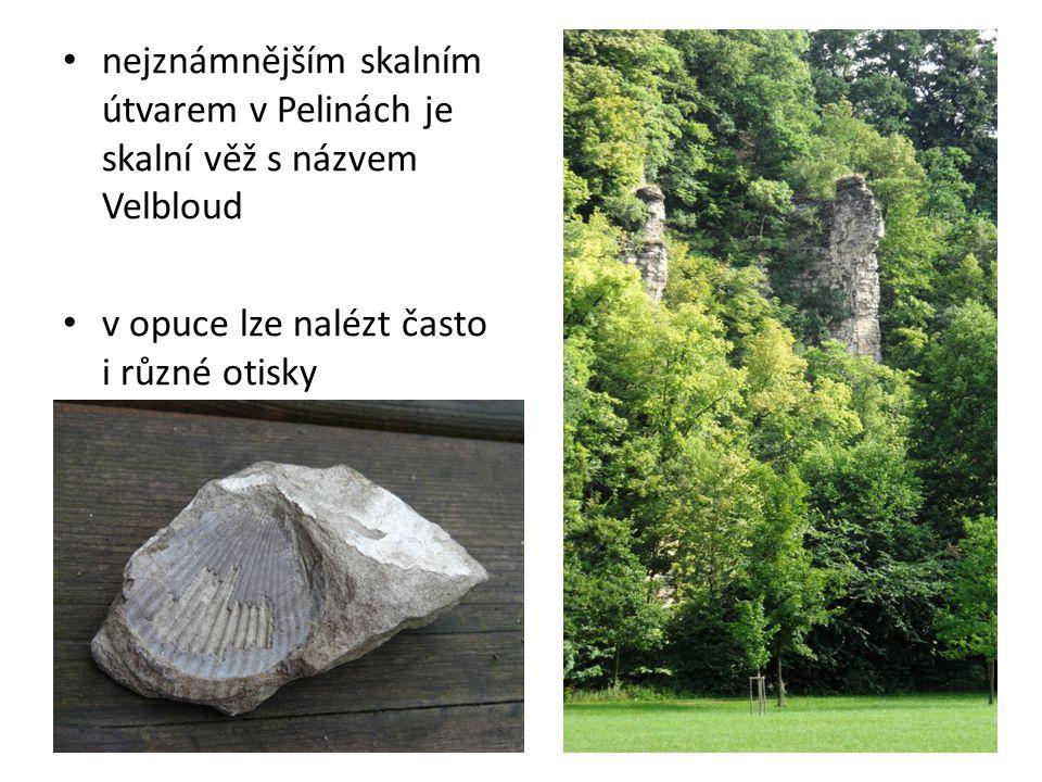 nejznámnějším skalním útvarem v Pelinách je skalní věž s názvem Velbloud v opuce lze nalézt často i různé otisky