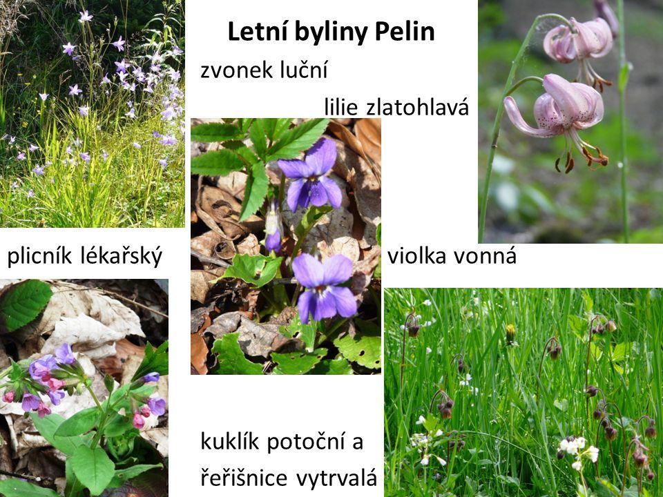 Letní byliny Pelin zvonek luční lilie zlatohlavá plicník lékařský violka vonná kuklík potoční a řeřišnice vytrvalá