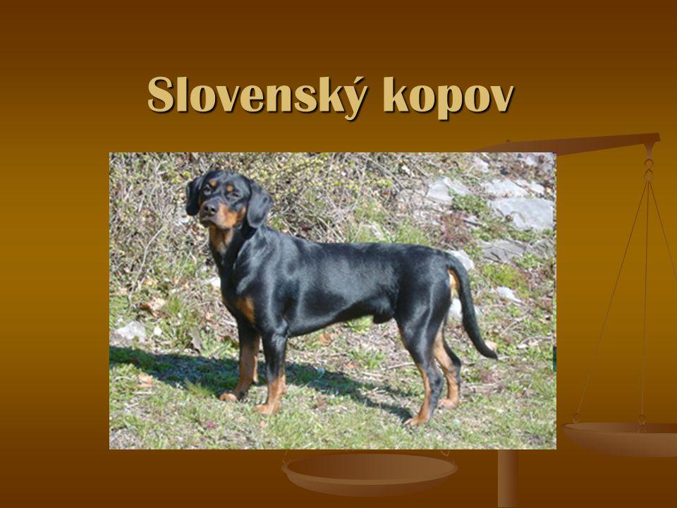 Slovenský kopov je plemenem, které je vysoce ceněné pro svoji schopnost trpělivě a vytrvale po dlouhé hodiny výborně sledovat stopu nebo vůni lovené zvěře.