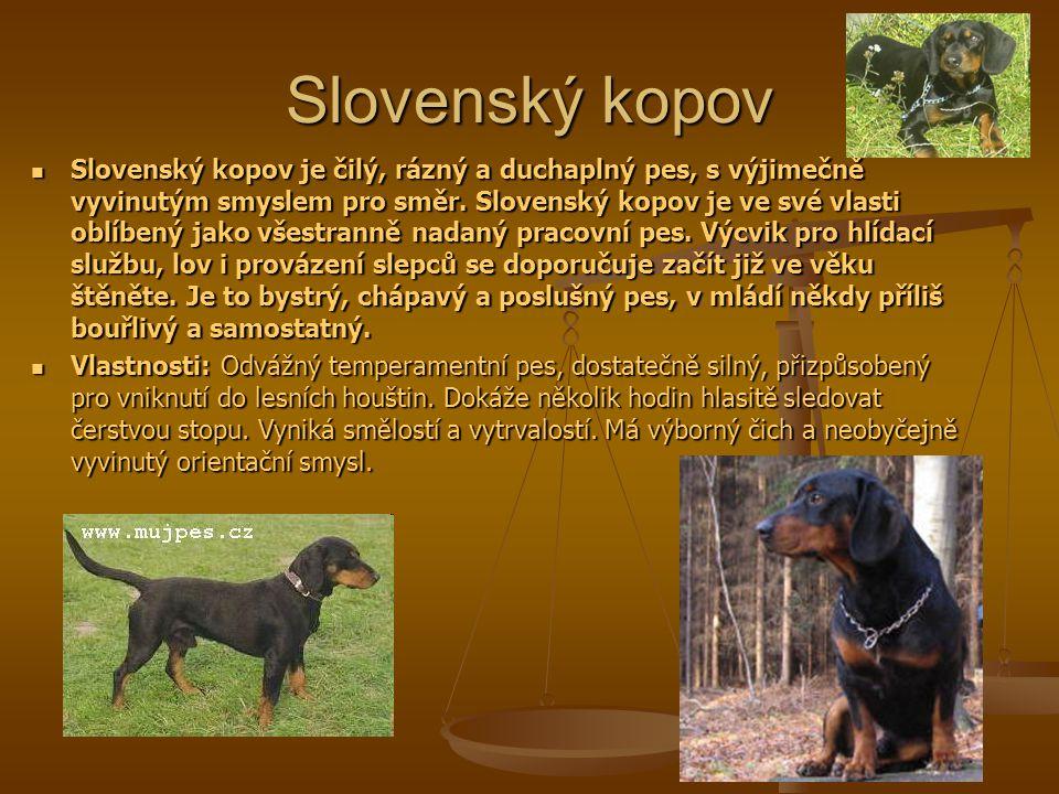 Slovenský kopov Slovenský kopov je čilý, rázný a duchaplný pes, s výjimečně vyvinutým smyslem pro směr.