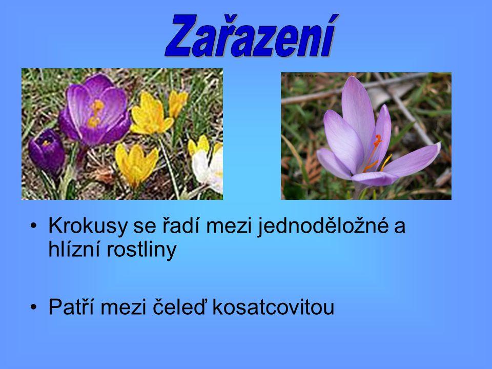 Jedná se o byliny podzemní a vytrvalé Na listech najdeme rovnoběžné rýhy Květy jsou převážně velké, složené s šesti okvětních lístků