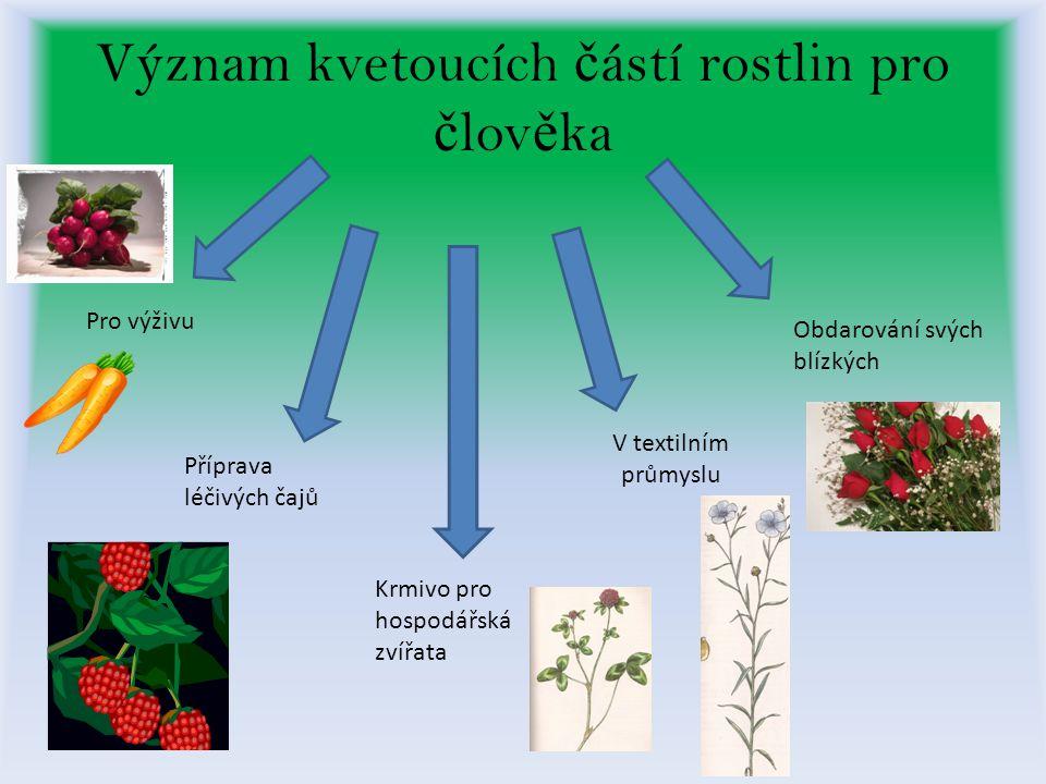 Význam kvetoucích č ástí rostlin pro č lov ě ka Pro výživu Krmivo pro hospodářská zvířata Příprava léčivých čajů V textilním průmyslu Obdarování svých blízkých