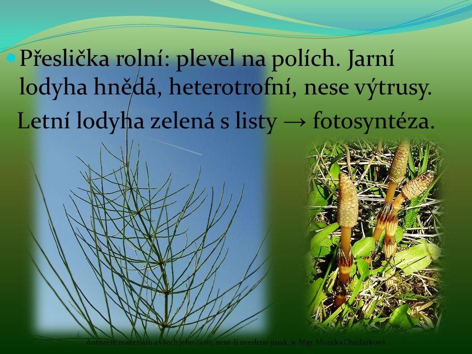 Přeslička rolní: plevel na polích. Jarní lodyha hnědá, heterotrofní, nese výtrusy. Letní lodyha zelená s listy → fotosyntéza. Autorem materiálu a všec