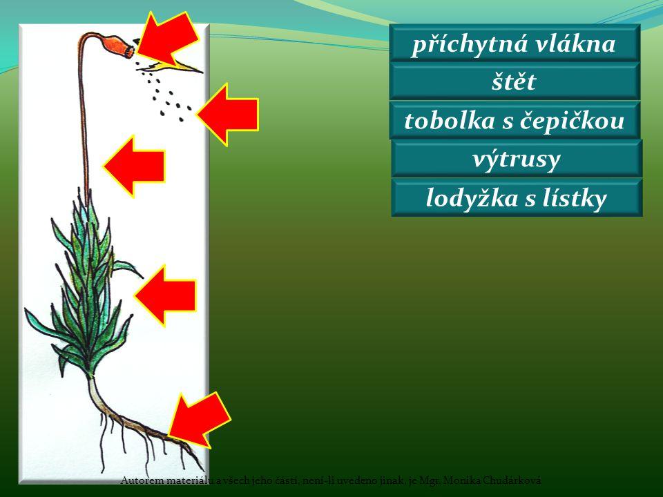 příchytná vlákna štět tobolka s čepičkou výtrusy lodyžka s lístky Autorem materiálu a všech jeho částí, není-li uvedeno jinak, je Mgr. Monika Chudárko