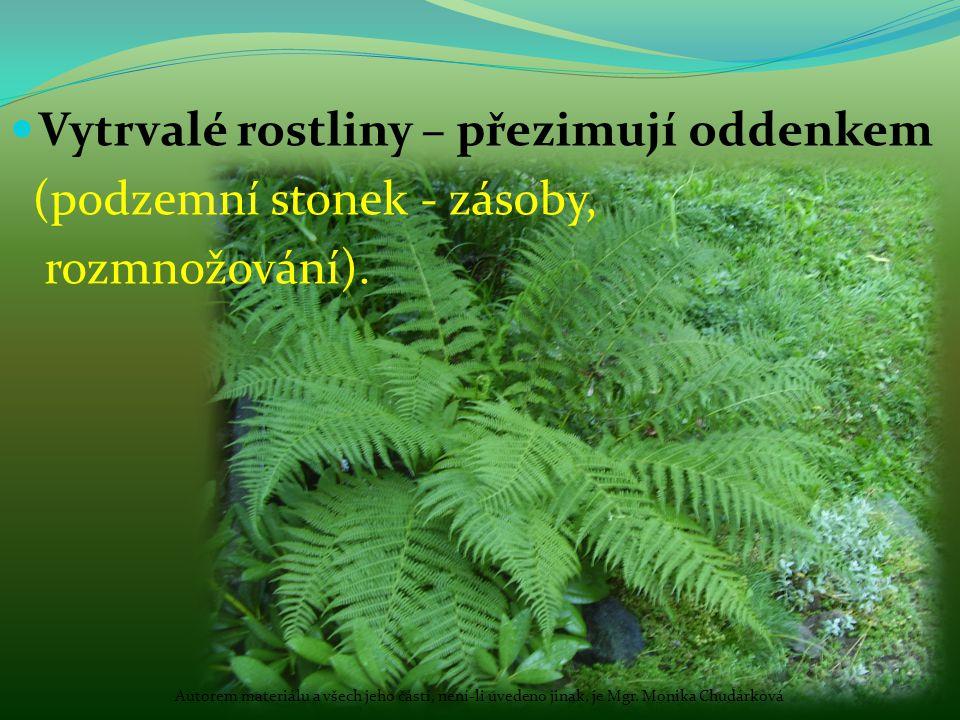Vytrvalé rostliny – přezimují oddenkem (podzemní stonek - zásoby, rozmnožování). Autorem materiálu a všech jeho částí, není-li uvedeno jinak, je Mgr.
