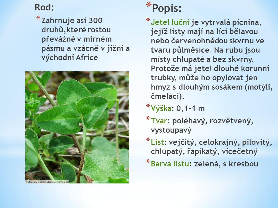 Rod: * Zahrnuje asi 300 druhů,které rostou převážně v mírném pásmu a vzácně v jižní a východní Africe * Popis: * Jetel luční je vytrvalá pícnina, její