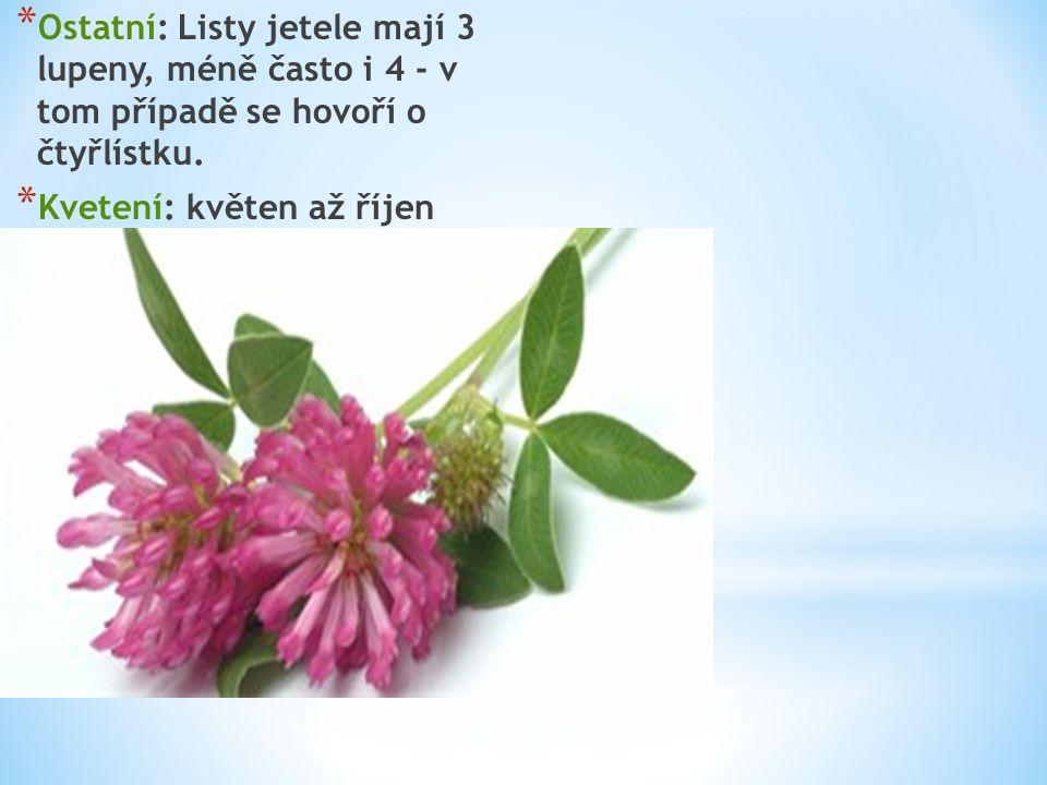 * Ostatní: Listy jetele mají 3 lupeny, méně často i 4 - v tom případě se hovoří o čtyřlístku. * Kvetení: květen až říjen
