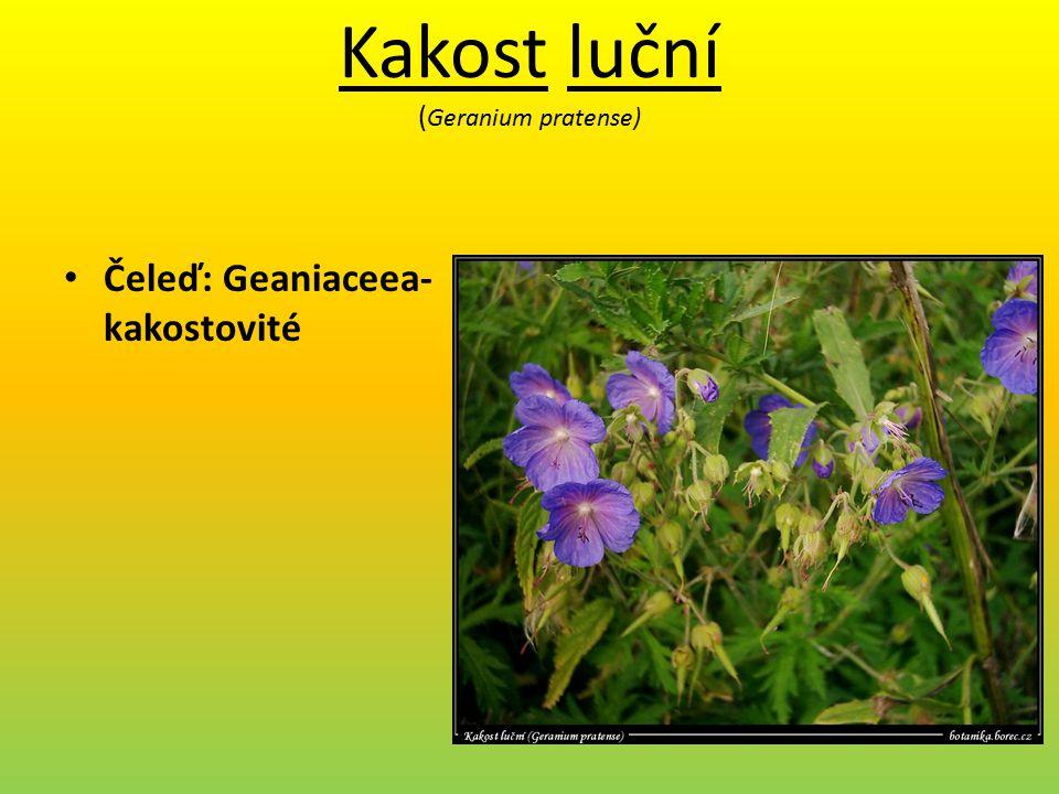 Kakost luční ( Geranium pratense) Čeleď: Geaniaceea- kakostovité