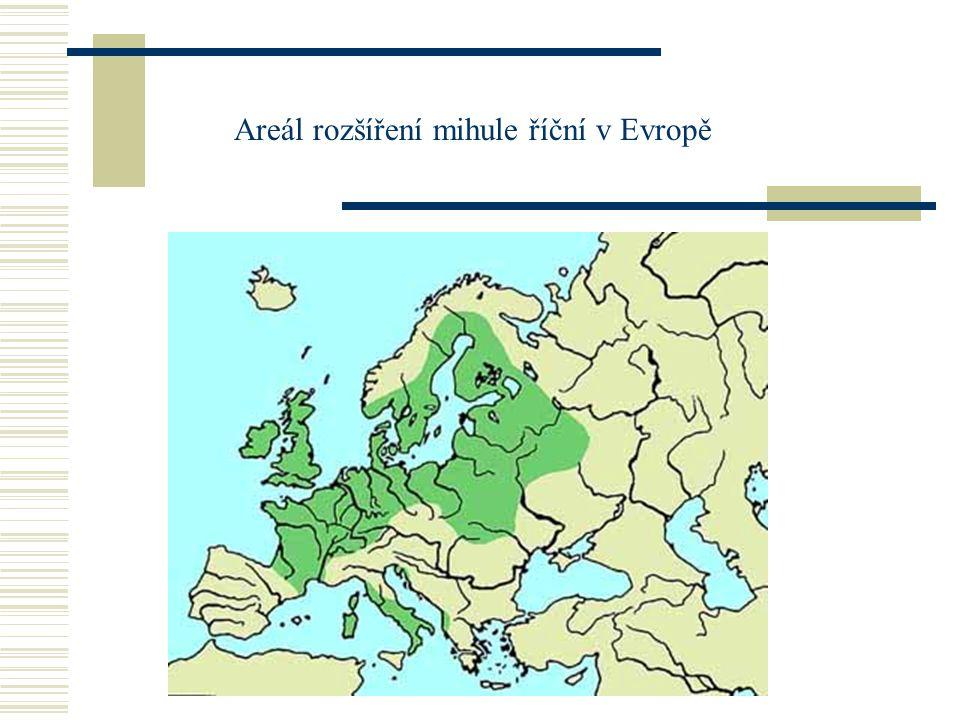 Areál rozšíření mihule říční v Evropě