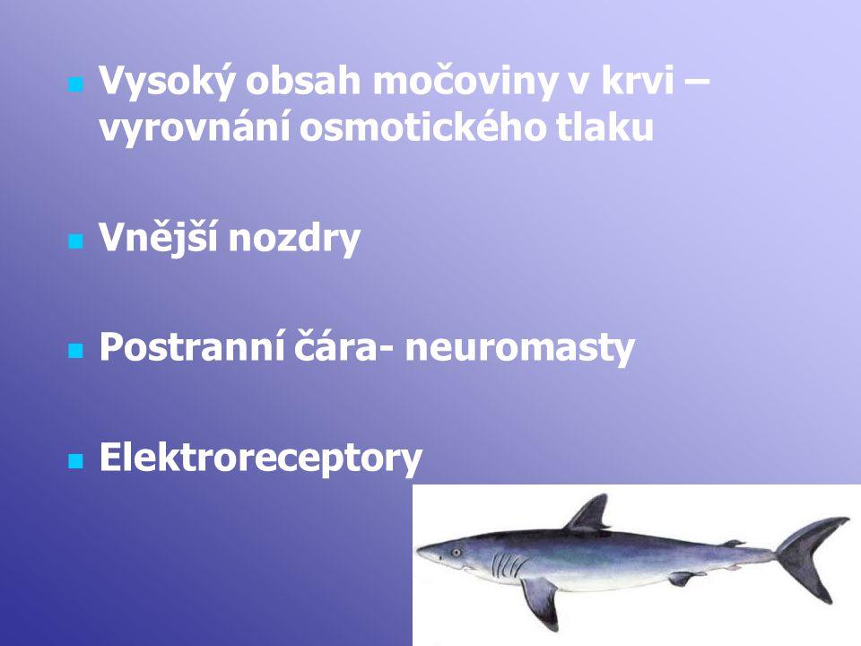 Vysoký obsah močoviny v krvi – vyrovnání osmotického tlaku Vnější nozdry Postranní čára- neuromasty Elektroreceptory