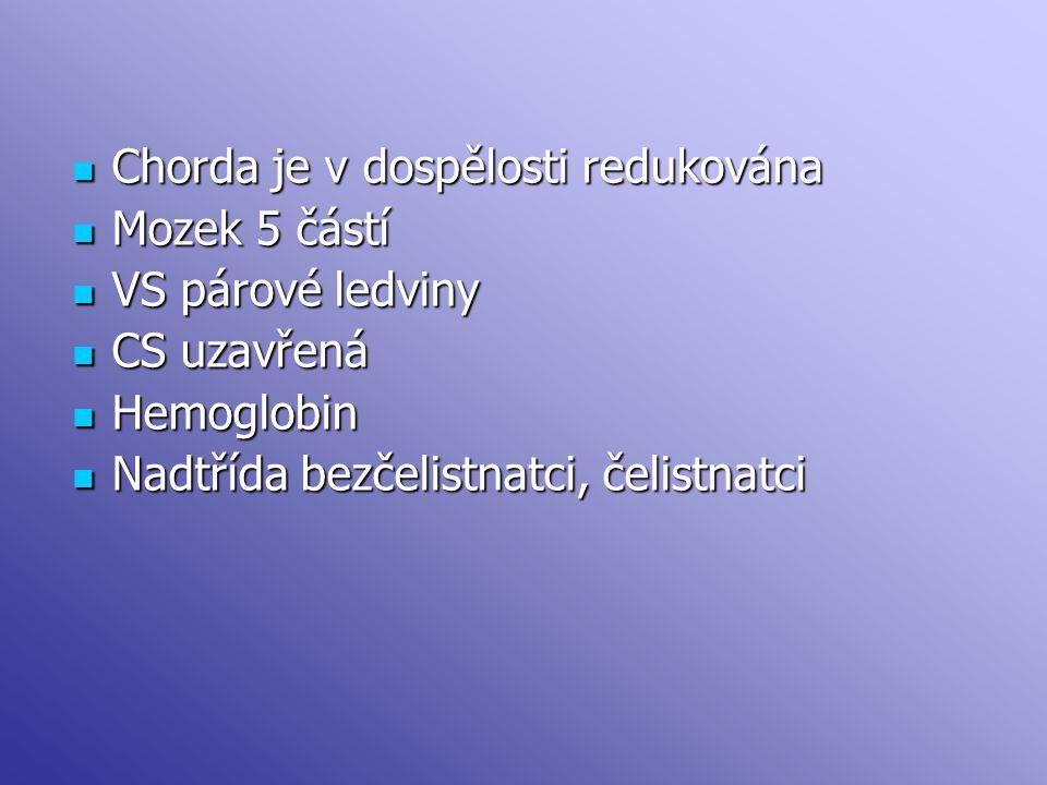 Chorda je v dospělosti redukována Chorda je v dospělosti redukována Mozek 5 částí Mozek 5 částí VS párové ledviny VS párové ledviny CS uzavřená CS uza