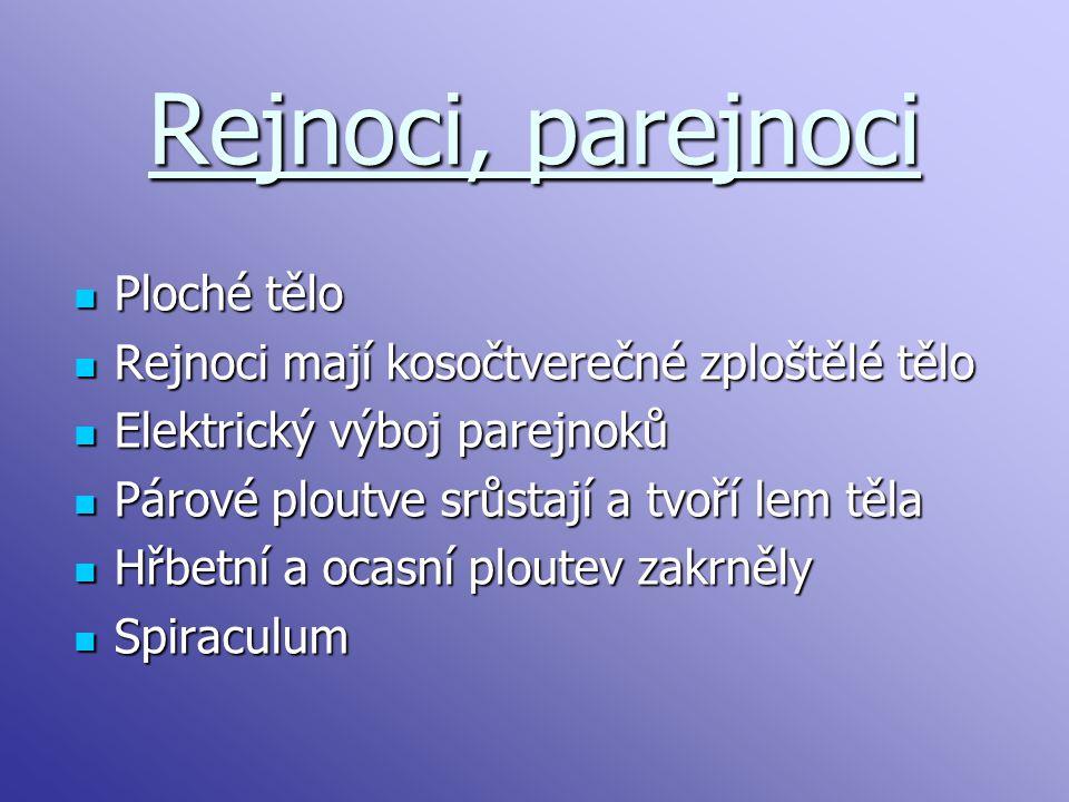 Rejnoci, parejnoci Ploché tělo Ploché tělo Rejnoci mají kosočtverečné zploštělé tělo Rejnoci mají kosočtverečné zploštělé tělo Elektrický výboj parejn