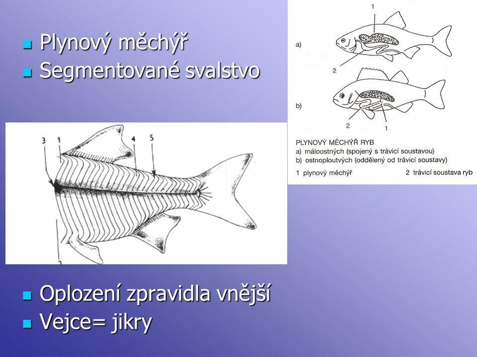 Plynový měchýř Plynový měchýř Segmentované svalstvo Segmentované svalstvo Oplození zpravidla vnější Oplození zpravidla vnější Vejce= jikry Vejce= jikr