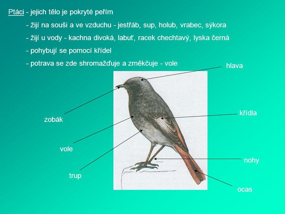 Ptáci - jejich tělo je pokryté peřím - žijí na souši a ve vzduchu - jestřáb, sup, holub, vrabec, sýkora - žijí u vody - kachna divoká, labuť, racek ch