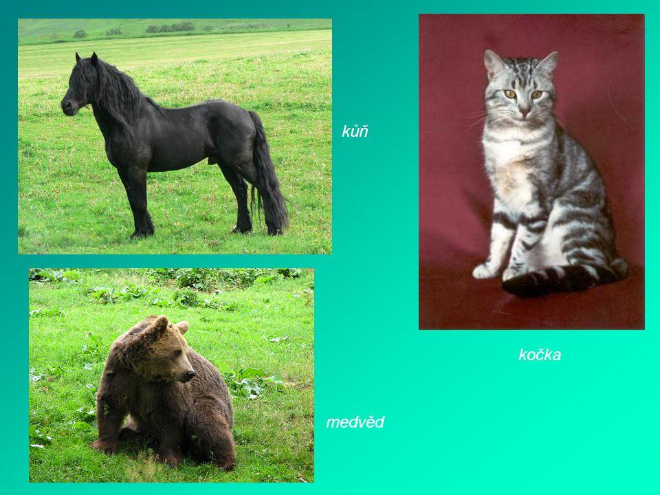 kočka kůň medvěd