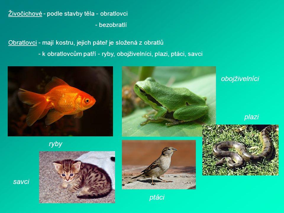 Živočichové - podle stavby těla - obratlovci - bezobratlí Obratlovci - mají kostru, jejich páteř je složená z obratlů - k obratlovcům patří - ryby, ob