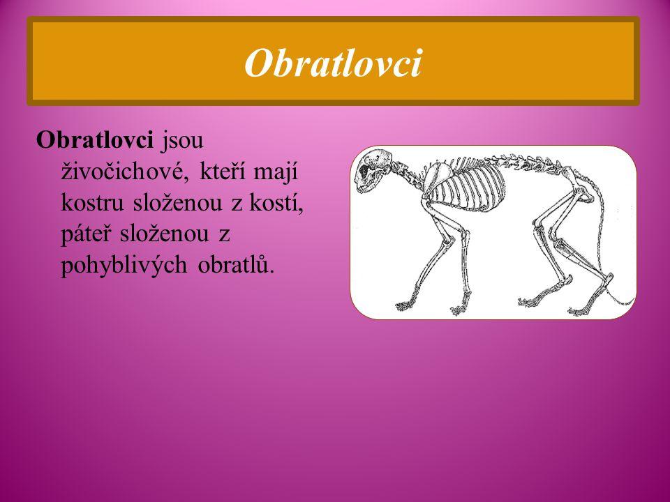 Obratlovci Obratlovci jsou živočichové, kteří mají kostru složenou z kostí, páteř složenou z pohyblivých obratlů.